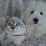 【獣医師監修】犬や猫の免疫力を高める事が期待!POC(極小粒径炭素)とは?