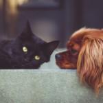 【獣医師監修】犬・猫の癌治療をサポートする代替療法にクローズアップ