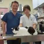 犬や猫を癌から救う最新代替療法とは?町の獣医さんに独占取材!