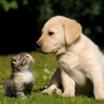 【獣医師監修】犬・猫の「癌 三大療法」の現状について徹底解説