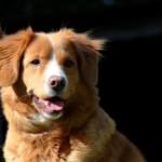 【獣医師監修】犬の免疫と免疫力低下の原因を徹底解説
