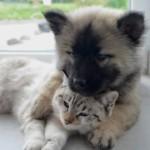 【獣医師監修】犬猫の癌治療を助ける補完代替療法とPOC療法