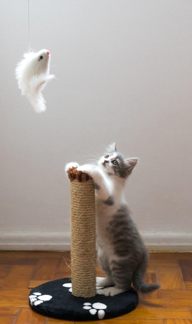 猫 ジャンプ力 低下