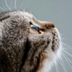 【獣医師監修】猫の癌について 原因・症状・治療法・予防を徹底解説