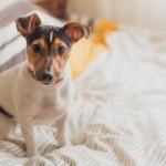 【獣医師監修】犬の免疫力を高める方法!これは知っておきたい!