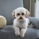 【獣医師監修】犬の皮膚腫瘍の種類や原因・症状・治療を徹底解説