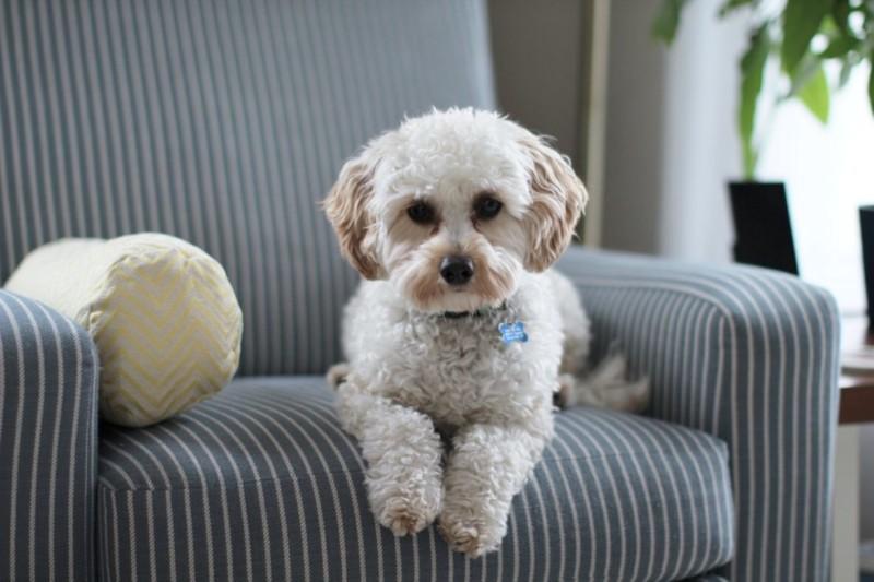 獣医師監修 犬の皮膚腫瘍のリスクの軽減は食事にあり 動物のきもち