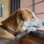 【獣医師監修】高齢犬に多い慢性腎不全 症状から食事や予防について徹底解説