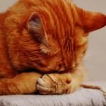 【獣医師監修】猫風邪の原因・症状・治療法を徹底解説